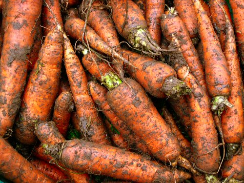 Last carrots from last year