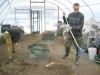 Volunteers clean greenhouse