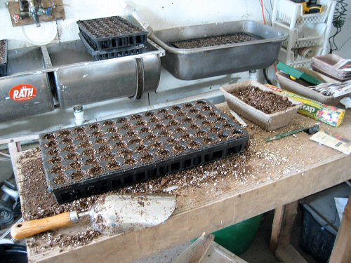 Seedling station
