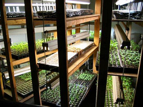 Plant racks loaded up