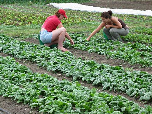 Team harvest!