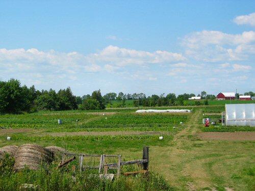 Field in late July