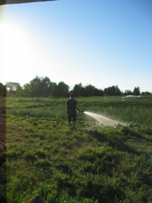 Hand watering in the field