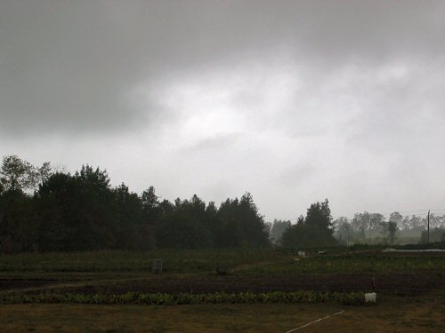 At last, rain!
