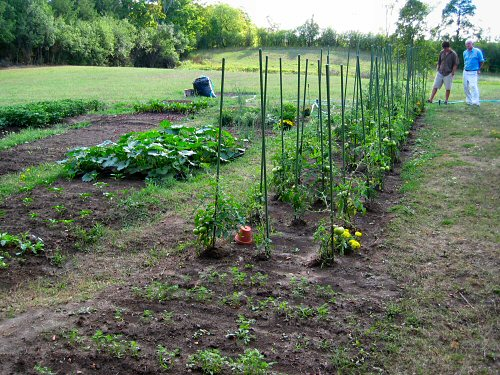 Richard's new veggie garden