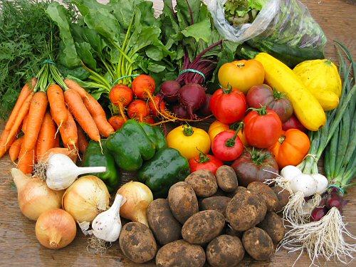 CSA harvest share