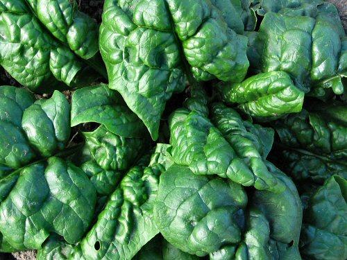 Spargo spinach