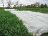 Floating row cover for frost protection
