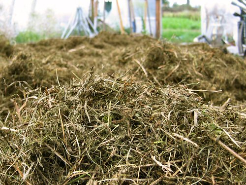 Grass and alfalfa mulch