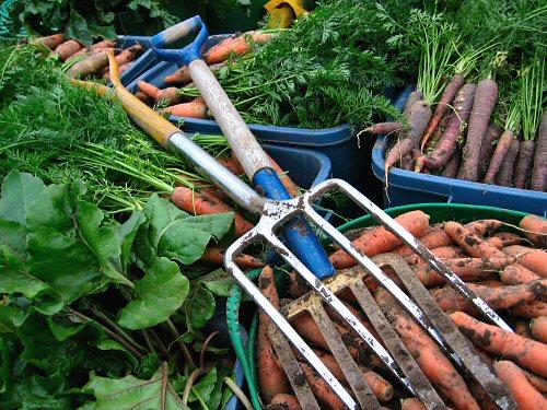 Final farmers' market harvest for 2007
