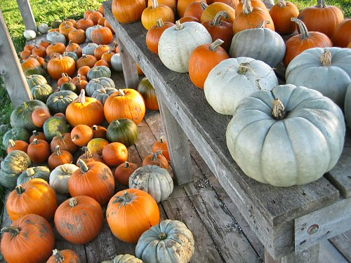 Pumpkins on the stand