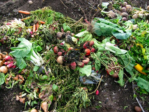 Veggies on the compost heap