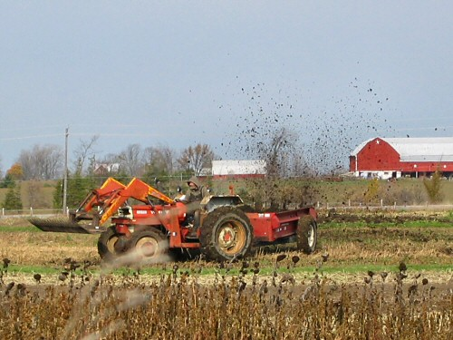 Manure spreading action!