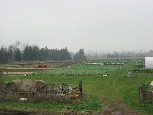 Field in mid-November
