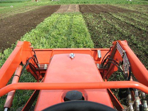 Tilling in oats green manure