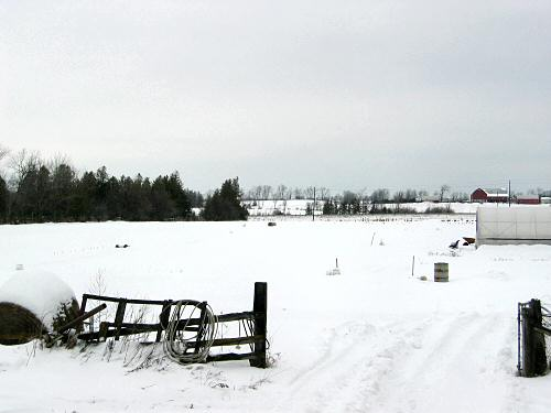 Snowy field in January