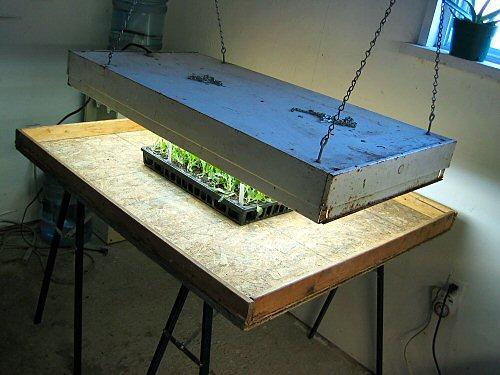 Four-fluorescent lightbox