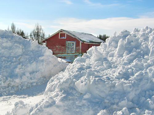 Snowbanks in front of the chickenhouse