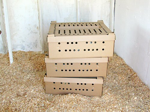 Chicks in boxes