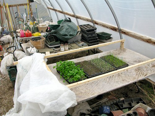 First seedlings in the greenhouse