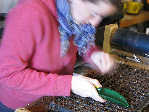 Seeding plugsheets