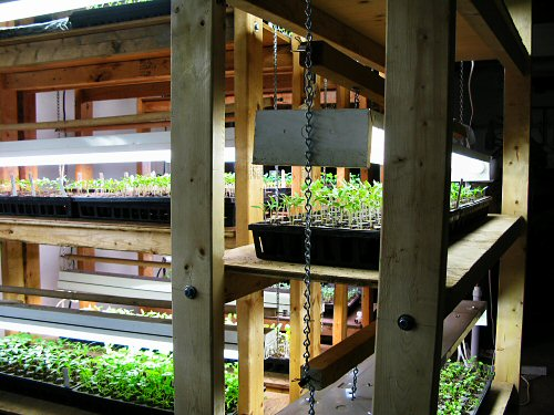 Seedlings on plant racks