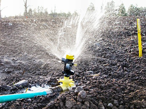 Watering in with a sprinkler