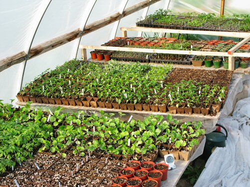 Seedlings away!