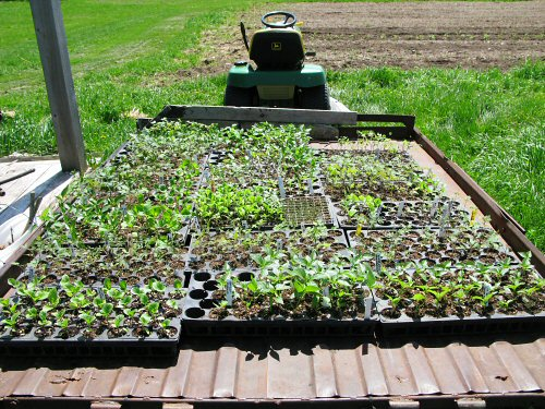 Ferrying seedlings to the greenhouse