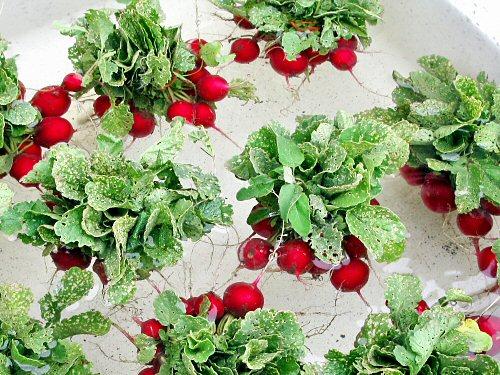 Just radishes…