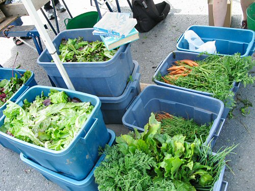 Backstage at the farmers' market: harvest bins