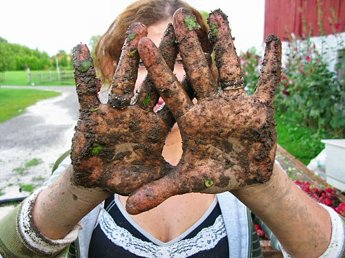 Muddy post-harvest hands