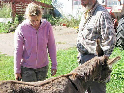 Assessing the donkey job