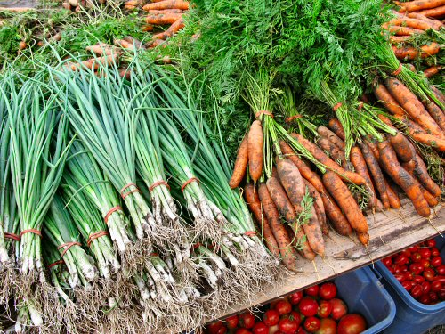 Post-harvest: green onions, carrots and tomatoes