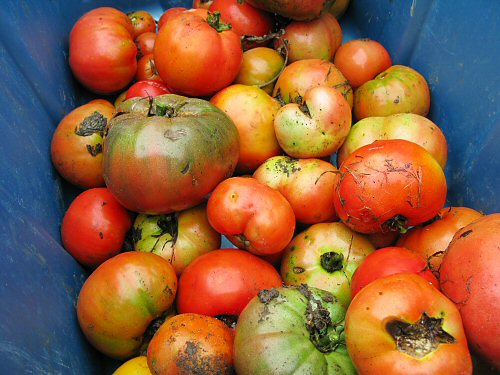 Assorted tomatoes