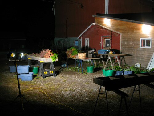 Post-harvest after dark