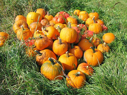 Pumpkins and pigweed