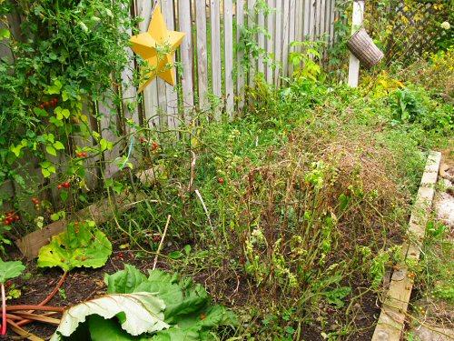 Rachelle's kitchen garden