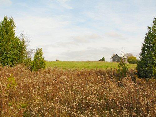 Fresh field