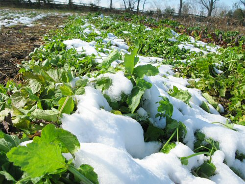The snow-on-veggies effect…