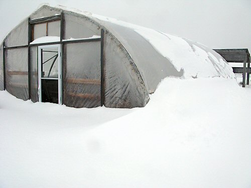 Snowbound greenhouse