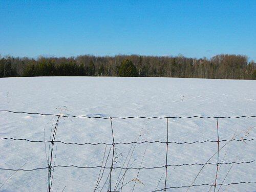 North field in snow