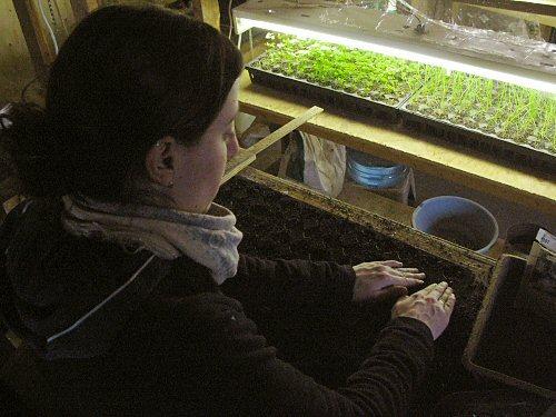 Seeding into plugsheets