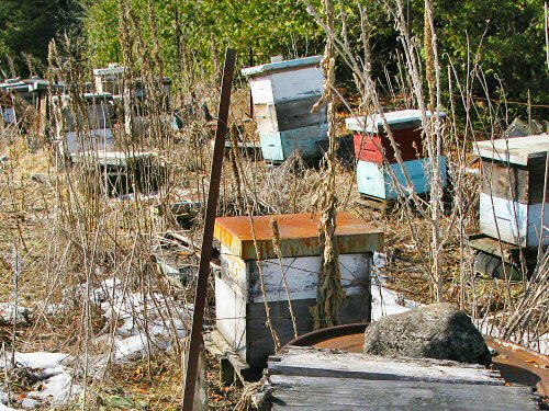 Abandoned bee village