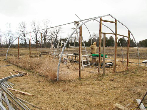 Dismantling the hoophouse: removing ribs