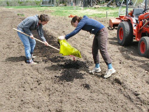Spreading compost by the bed