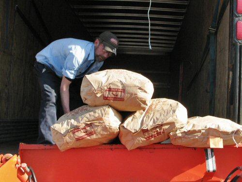 Unloading potatoes