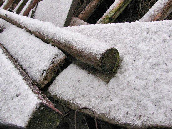 First snow, 2009