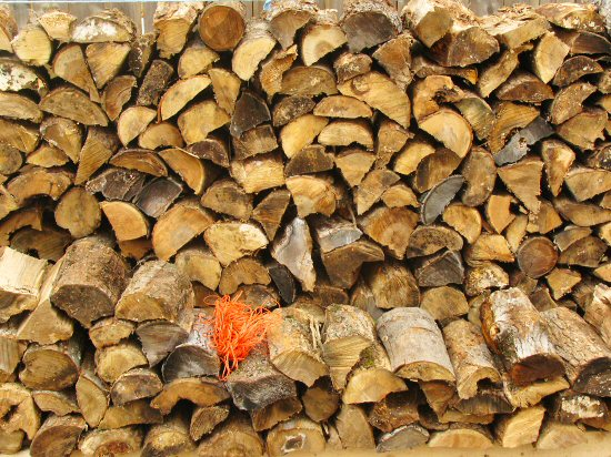 """Stacked 16"""" firewood"""