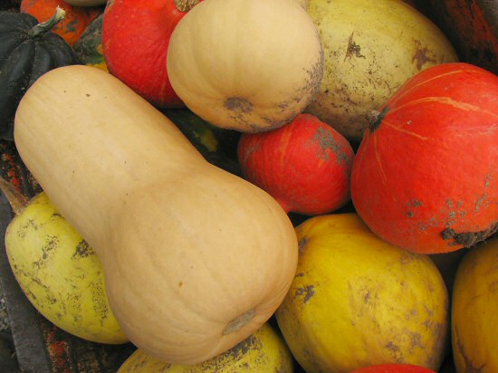 First harvest of winter squash